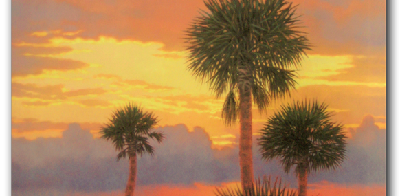 Silhouetted Palms by Michael Story!