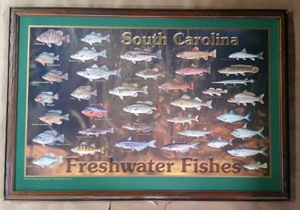Framed South Carolina Freshwater Fishes Poster Columbia