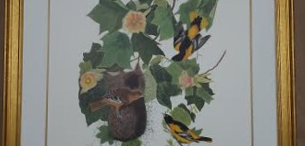 Framed Audubon Print!